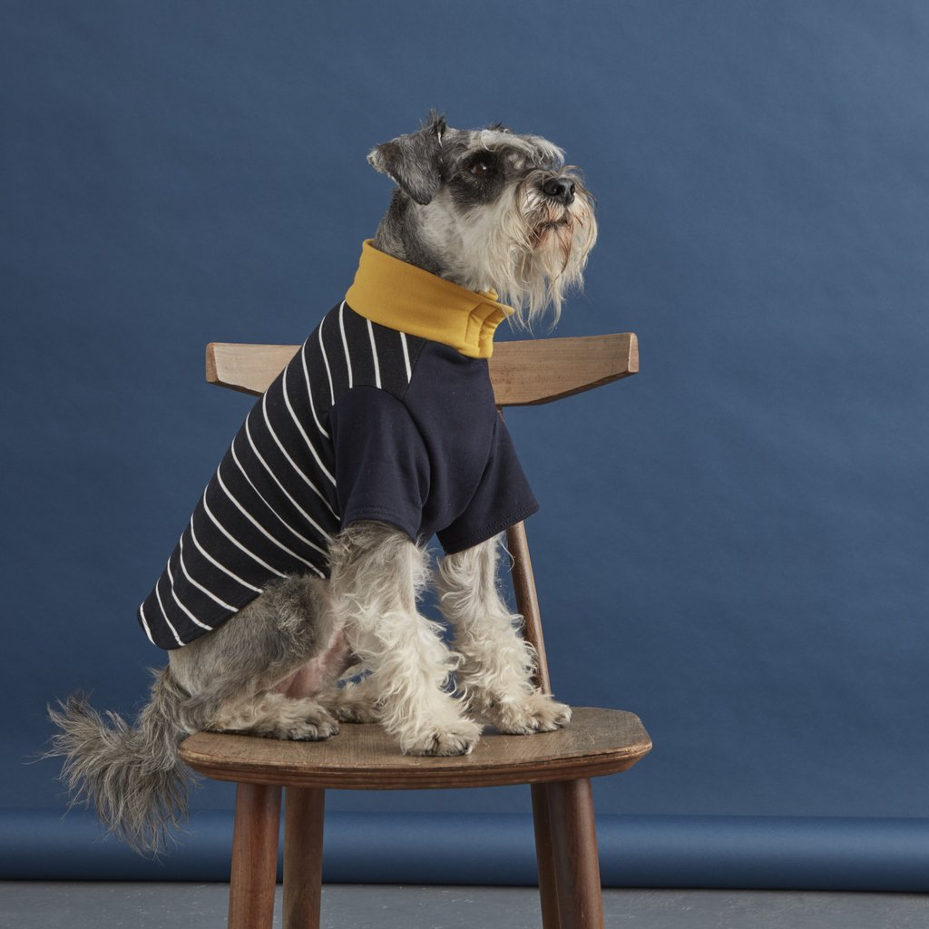 Striped Dog Sweater | Navy and Yellow