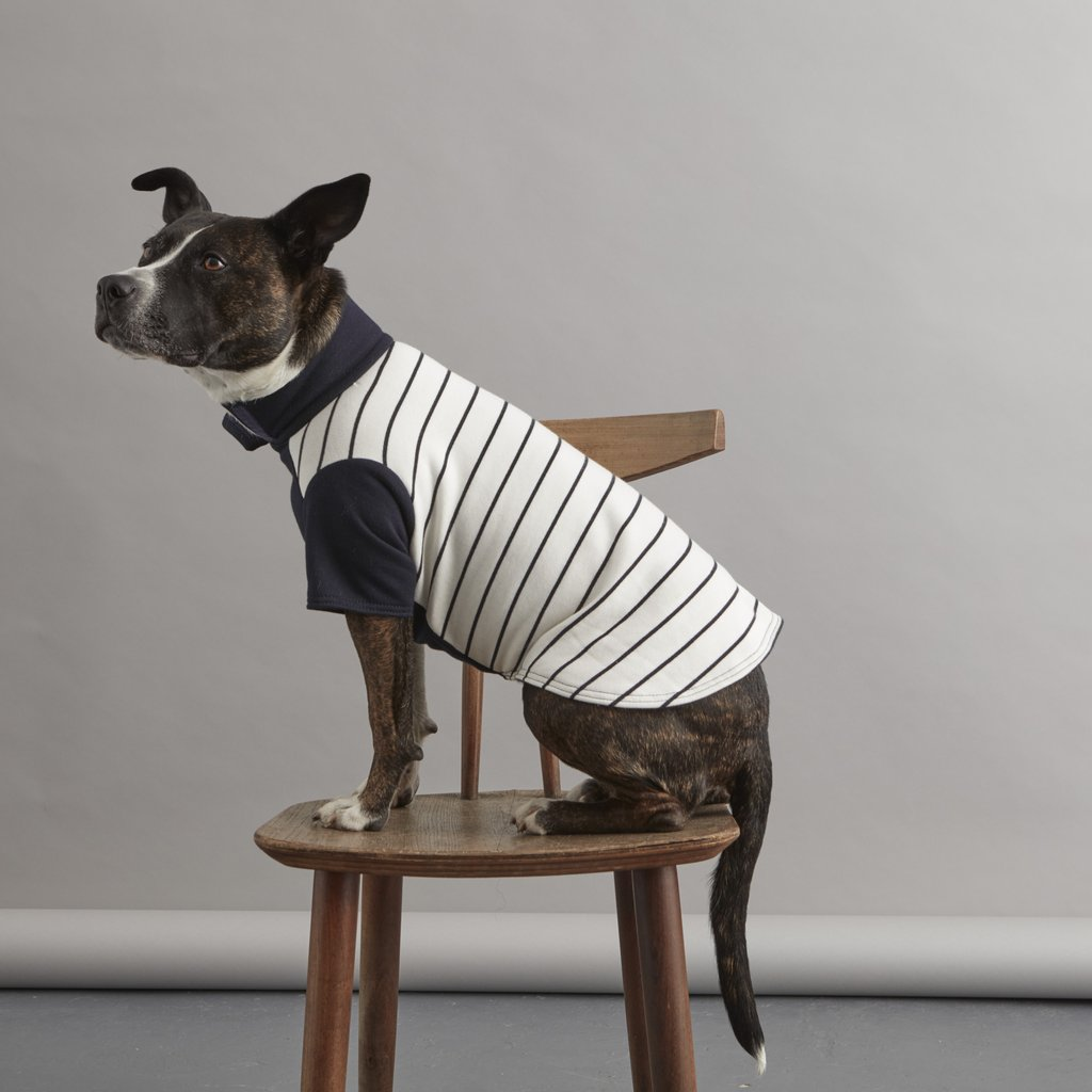 Striped Dog Sweater | Cream and Navy