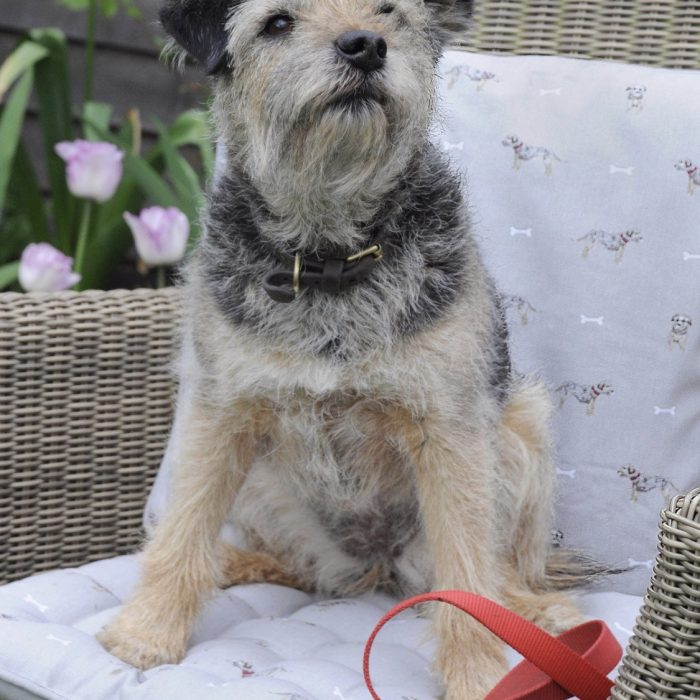 Terrier Cushion by Sophie Allport