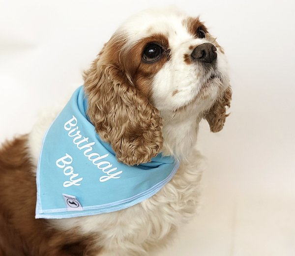 Birthday Boy Neckerchief Bandana