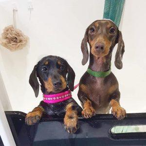 Dog Grooming Whittington