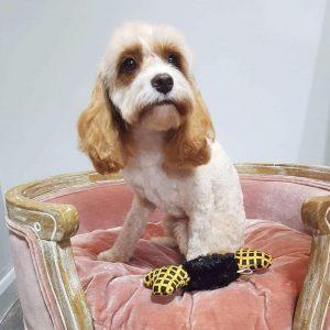 Dog Grooming Lichfield