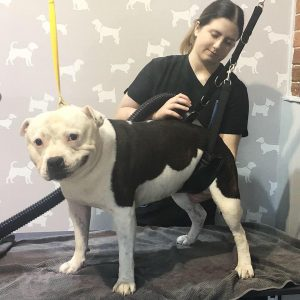 Dog Grooming Sutton Coldfield