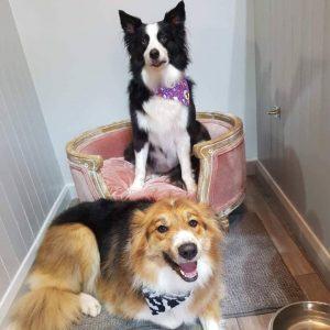 Dog Grooming Shenstone