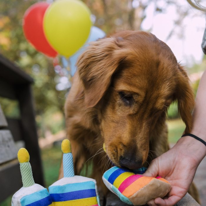 Party Time Bone-Appetit Cake Plush Dog Toy
